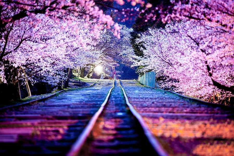 تصاویر دیدنی از ژاپن