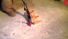 قطع شدن دست و  پای گربه  داخل ماشین مرد تهرانی!+ فیلم دردناک