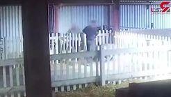 آزار و اذیت گوزن های شمالی در مزارع بریتانیا + فیلم