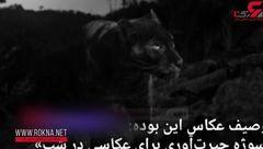 پلنگ سیاه پس از یک قرن شکار دوربین شد + فیلم