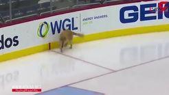 هاکی بازی کردن جالب و بامزه یک سگ روی زمین یخی + فیلم