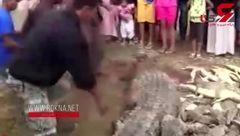 سرنوشت عجیب 300 تمساح! + تصویر