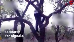 درخت بهترین مکان برای تلفن حرف زدن+فیلم