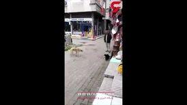 وحشت سگ خیابانی از یک گربه سیاه ! + فیلم عجیب