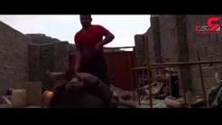 پسری که خری را شکنجه می داد دستگیر می شود / پلیس گرگان وارد عمل شد + فیلم شکنجه