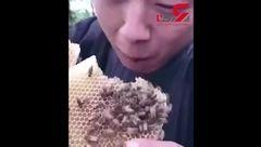 این مرد کندوی عسل را با زنبورهایش گاز می زند! + فیلم