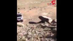 نجات یک اسب در کوه+فیلم