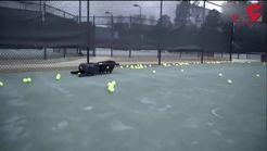 ربات توپ تنیس جمع کن هم به بازار آمد +فیلم