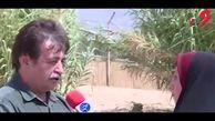 تصادفات جادهای علت اصلی مرگ یوزپلنگ های ایرانی / سگ ها هم نقش دارند ! + فیلم