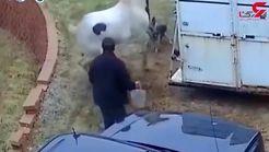 کتک زدن سگ توسط اسب + فیلم