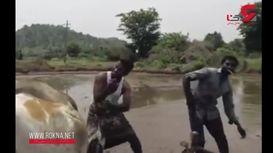 مسخره کردن بامزه چالش رقص در زمین برنج + فیلم