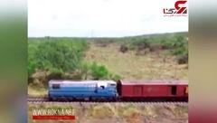 گله فیلها قطار را از ریل خارج کرد + فیلم