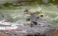 لحظه حمله تمساح ها به  بچه آهو مقابل چشمان مادرش + فیلم