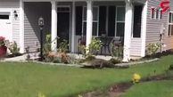 یک تمساح روی 2 پا ایستاد و زنگ خانه را زد! + فیلم باورنکردنی