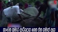 کار زیاد فیل بیچاره را از پا درآورد + فیلم