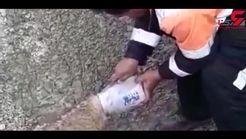 نجات جان یک گرگ توسط راننده لودر در کهگیلویه و بویراحمد+فیلم