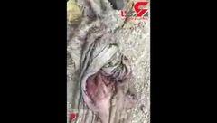 جزییات جدید از سر بریدن الاغ ها در اصفهان+فیلم