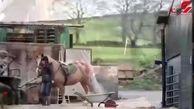 مهارت زن انگلیسی در آرایش حیوانات + فیلم و تصاویر