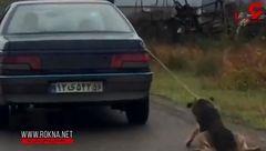 این سگ بی نوا را در گیلان هم به ماشین بستند و کشیدند + فیلم