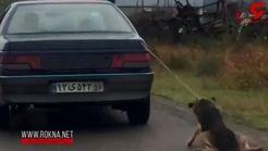 مرد حیوان آزار در شفت دستگیر شد / این مرد سگ را با خودرویش در خیابان میکشاند +فیلم
