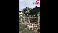 اقدام وحشیانه مرد روانی با یک سگ گرسنه+ فیلم