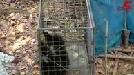 لحظهی نجات خرس گیر افتاده در چاه+فیلم