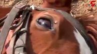 اسبی که دست هنرپیشههای هالیوود را هم از پشت بست! + فیلم