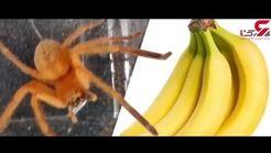 موز خوردن شاید جان شما را بگیرد! + فیلم