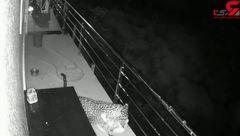 فیلم لحظه شکار سگ خانگی توسط پلنگ در حیاط ویلا