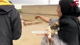 نجات سگ هاى بی پناه توسط سیل زدگان + عکس