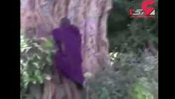 مرگ درختان کهنسال آفریقا به دلیل تغییرات آب و هوایی + فیلم