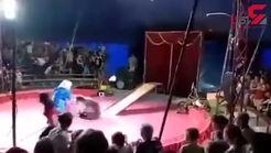 حمله خرس به یک مربی در سیرک+ فیلم