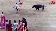 حمله وحشتناک گاو وحشی به زن گاو باز! + فیلم 14+