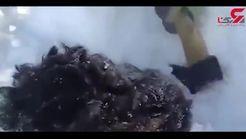 فیلمی از نجات سگ بیچاره از مرگ حتمی