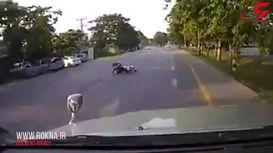 موتور سوار احمق خود را به کشتن داد! + فیلم