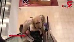 ترس بامزه  سگی  از پله برقی + تصویر