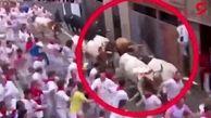 افتادن گردشگران زیر دست و پای گاوها در فستیوال گاوبازی + فیلم