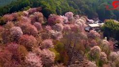 چشم انداز های دیدنی و بکر  ژاپن+فیلم