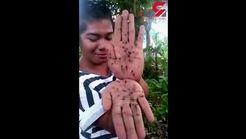 فیلمی از دختری که به روش جالب حشره ها را می کشد