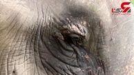 رقص فیل نابینا با آوای موسیقی+ فیلم
