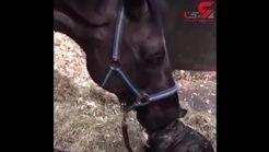 دوستی عجیب و جالب اسب با یک سگ + فیلم