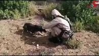 فیلم لحظه نجات توله سگ بازیگوش از عمق چاه 6 متری در خوزستان