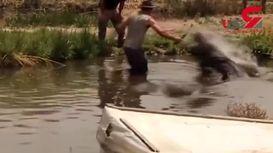 صحنه وحشتناک ترین حمله تمساح به یک مرد! + فیلم