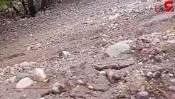 سقوط خودروی وانت بار پیکان در محور یاسوج - اصفهان + فیلم
