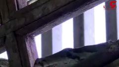 پاتوق مارهای پیتون در یک معبد بودایی + فیلم
